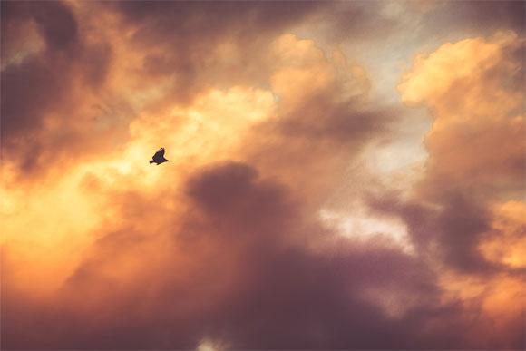 Aguila al atardecer