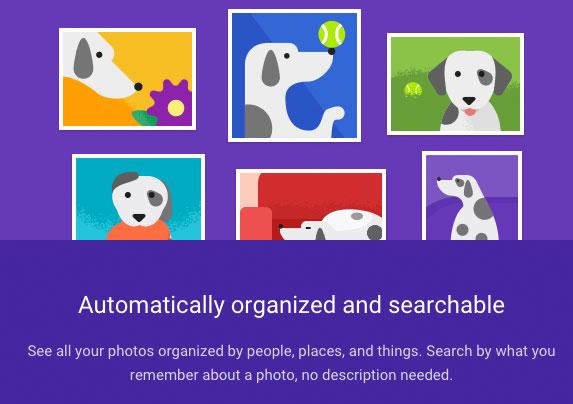 Buscando por Perro en Google Photos