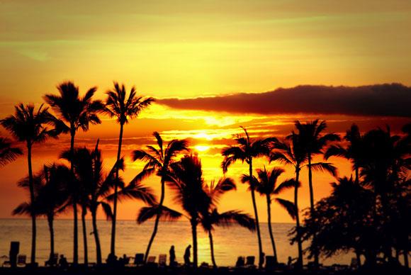 Palmeras de Hawaii, de Walter-Wilhelm