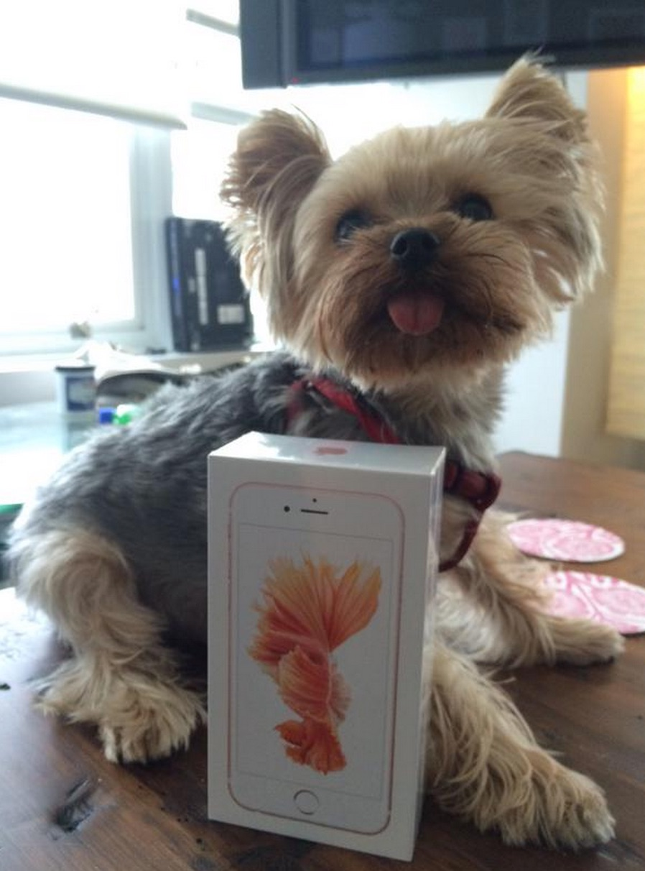iPhone 6S con el perrito