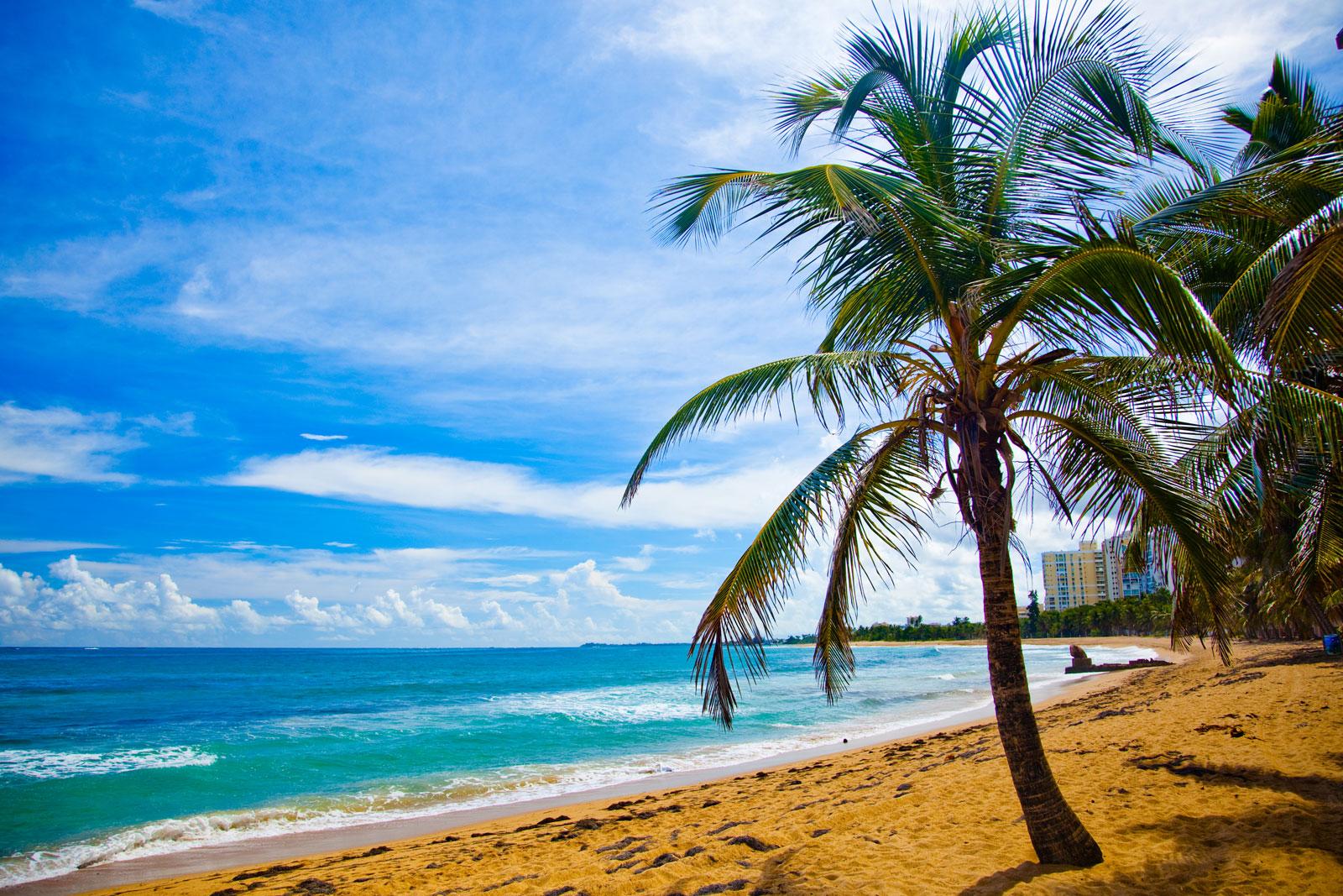 fondo de pantalla semanal playa y palmeras en costa rica