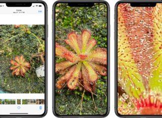 Haciendo Zoom en la App de Fotos en iOS 13 y en iOS 14